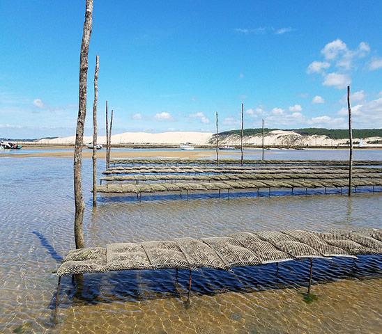 huîtres du Bassin d'Arcachon