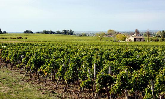 vin de Saint Emilion