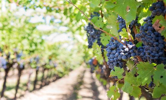 route des vins Saint Emilion